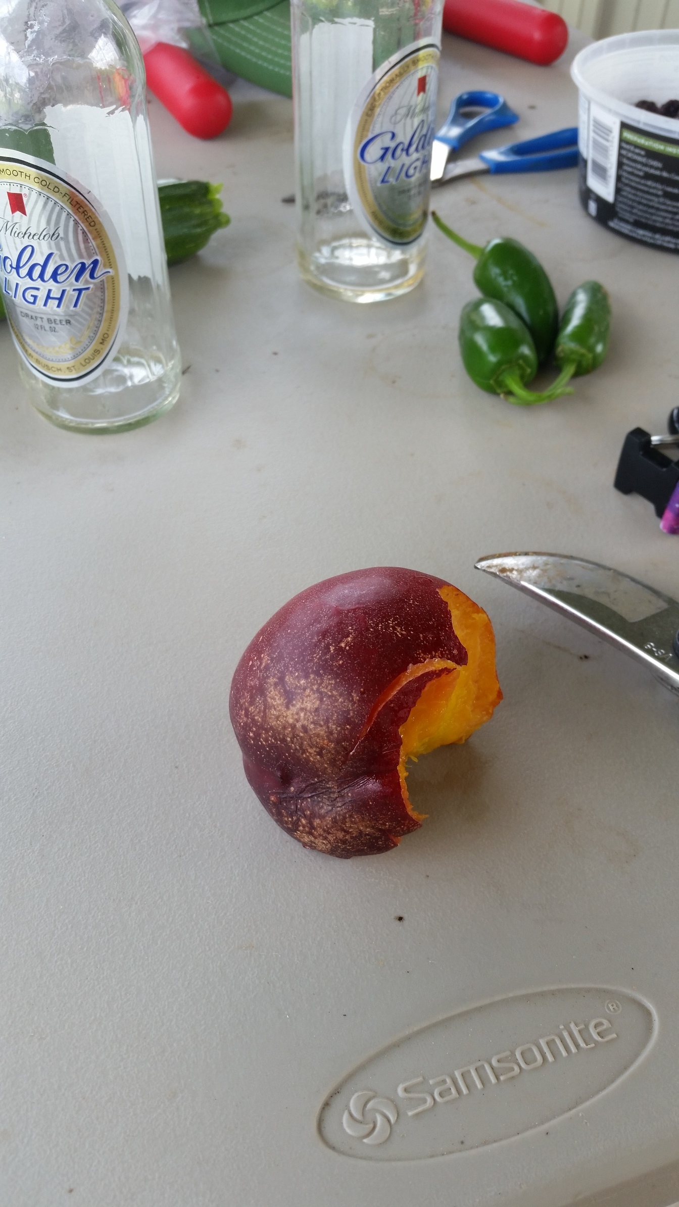 how to grow a nectarine from a pit