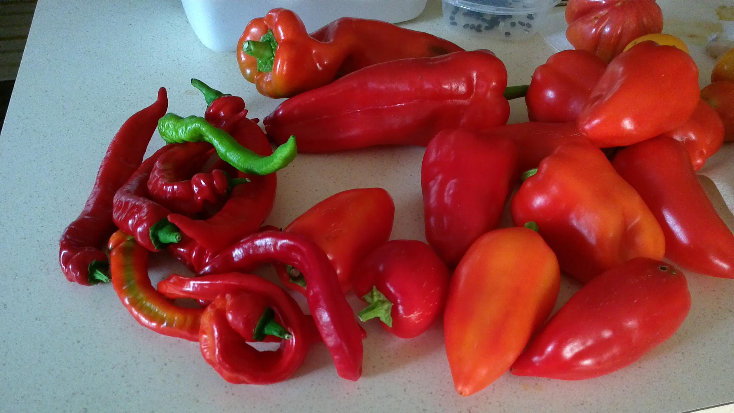 Your favorite pepper varieties general gardening - Best romanian pepper cultivars ...