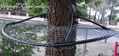 best 28 tree baffle versatile squirrel baffle feeding. Black Bedroom Furniture Sets. Home Design Ideas