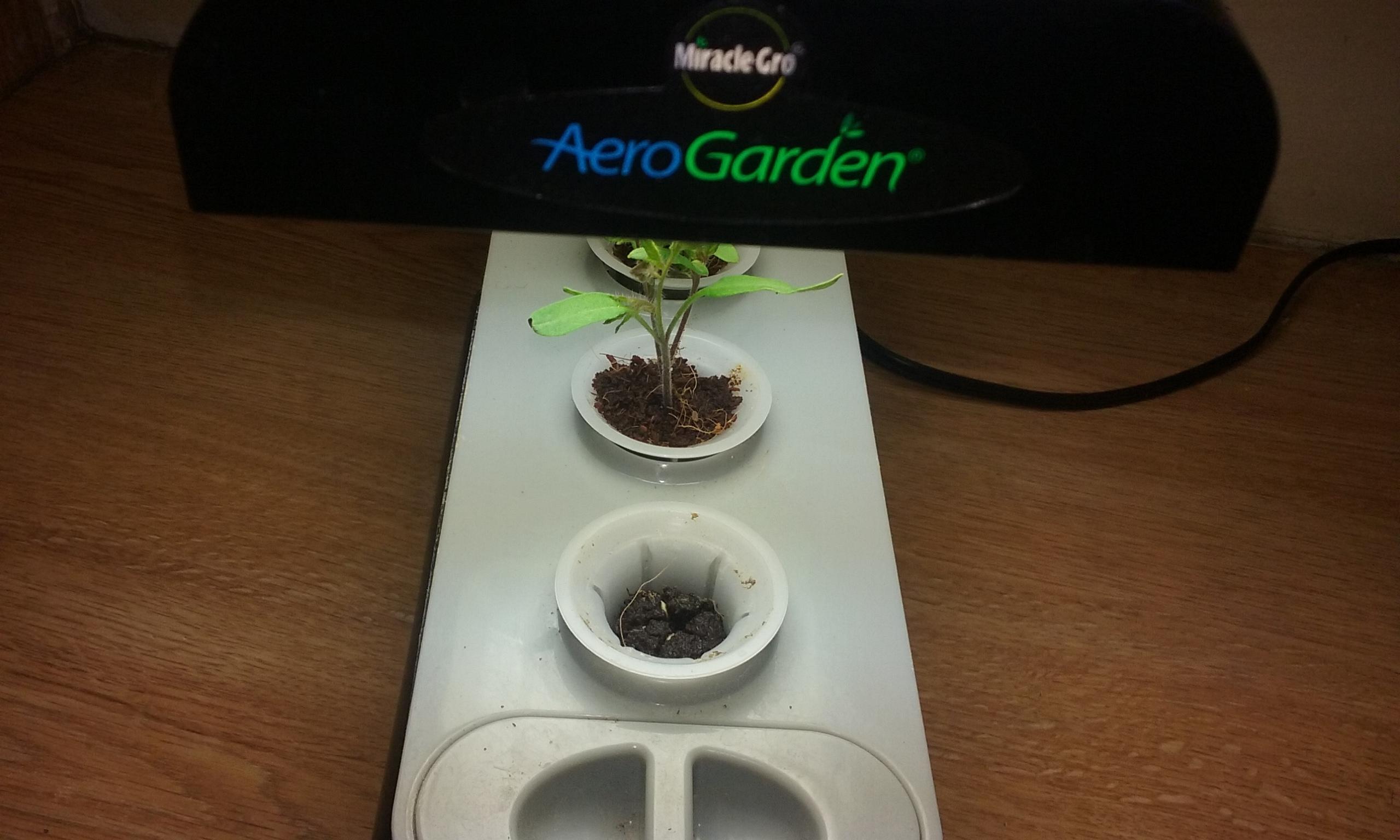 Hydroponics - General Gardening - Growing Fruit
