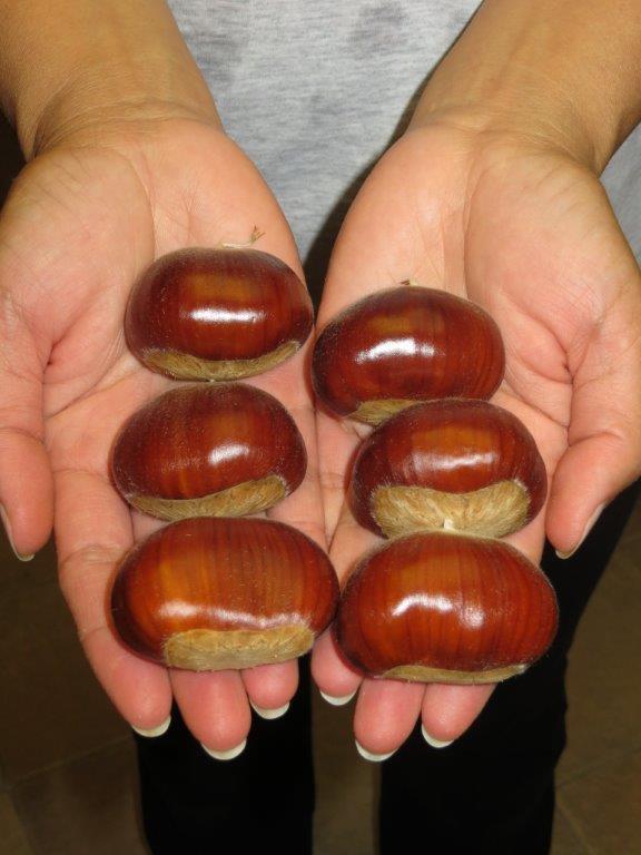 Giant Chestnuts General Fruit Growing Growing Fruit